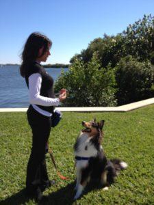 Sandra Machado - Dog Training - Learned Behaviors